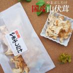 国産乾燥ヤマブシタケ 15g×2袋 メール便 ヘリセノン ヤマブシタケ 山伏茸 キノコ 茸 木野子 きのこ
