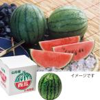 お中元 スイカ フルーツ山形県産小玉西瓜 (1玉)果物 旬 送料無料 2020