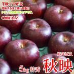 秋映りんご 長野県産 5kg特秀 贈答に最適 中生りんご