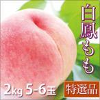 白鳳 桃 お中元 フルーツ 特選品 2kg 5-6玉入り