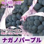 ぶどう ナガノパープル (ハウス)  特選品4kg 送料無料