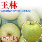 王林 りんご 長野県産 5kg 特秀15玉前後