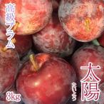 太陽 プラム 3kg  長野県産