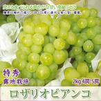 ロザリオビアンコ 高級白ぶどう 2kg 3-5房 特秀