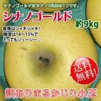 シナノゴールド -訳あり [丸かじり小玉サイズ] 送料無料- 長野県産 家庭用 約9kg