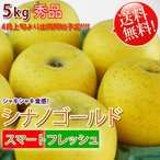 シナノゴールド 「スマートフレッシュ」貯蔵りんご 長野県産 秀品5kg 「送料無料」リンゴ