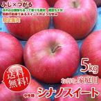 シナノスイート 長野りんご -訳あり- 送料無料  約5kg家庭用