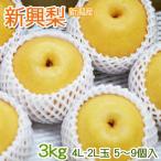 新興梨 なし 約3kg 4L-2L  5〜9玉