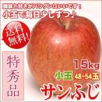 サンふじ 15kg 48-54玉 小玉 特秀 ギフト 送料無料 長野リンゴ
