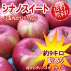 シナノスイート -訳あり丸かじり りんご小玉 約9kg 長野りんご 送料無料