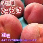 たまき 桃 3キロ 約12玉 一足早く、信州より早生品種の桃 たまきです