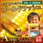とうもろこし 生とうもろこし 早割 送料無料 宮崎産ゴールドラッシュ 宮崎県JA西都協賛 約4.5kg(11〜15本) 産地直送 新鮮 日本最速出荷