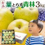 青りんご リンゴ ギフト 青林 青森 葉とらず  贈答用 3kg(8〜13玉) 送料無料 フルーツ お誕生日 内祝い プレゼント 秀品 産直