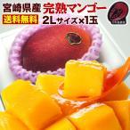 父の日 ギフト 果物 フルーツ マンゴー 宮崎 ポイント5倍 完熟 ご自宅用でも 完熟マンゴー特大2L玉(350g以上) JA西都協賛 光センサー完全選果 mango