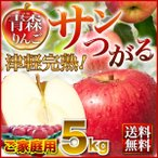 りんご 青森 津軽 サンつがるりんご 完熟ご家庭用 5kg(14〜18玉) ちょっぴり訳あり送料無料 農家直送 リンゴ