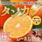 たんかん(タンカン)鹿児島県種子島産 L〜3L サイズ 2kg(秀品・優品)2箱以上 送料無料プラス1kg増量 産地直送 みかん | オレンジ | ぽんかん 柑橘