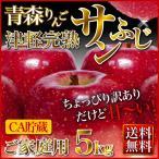 サンふじりんご 5kg ご家庭用 CA貯蔵  送料無料 青森県 津軽完熟  リンゴ 林檎  ポイント5倍
