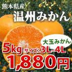熊本県産 温州みかん 【大玉のみかんです】5kg
