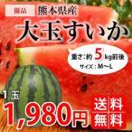 【送料無料】自宅用に!! 熊本県産 大玉すいか1玉(M~L) 約5kg前後