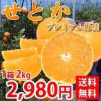 せとか 送料無料 希少品種 柑橘の女王 熊本県産  秀品2kg(8~13玉)入り
