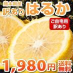 みかん  訳あり はるか 熊本県産 6kg 2セット購入で1セット分おまけ みかん ミカン 蜜柑