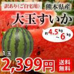 送料無料 自宅用に 熊本県産 大玉 すいか 1玉 M~L 約4.5~5kg前後