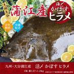 ヒラメ 活〆 神経ぬき 大分産 1.0〜1.2k 送料無料 御贈答 絶品刺身