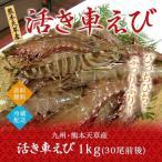 活き 車海老 1.0kg (30尾前後) 九州 熊本 天草産 送料無料 贈答用