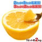 訳あり 完熟和製グレープフルーツ2kg 河内晩柑 熊本県産 送料無料 3セットなら2セットおまけ 不選別 複数購入は1箱におまとめ 3-5営業日以内に出荷(土日祝除)