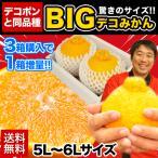 デコみかんと同品種 送料無料 驚異の大きさ 5L-6L限定 本場熊本県産 BIG デコみかん秀品2玉入り 2月中旬-3月上旬頃より順次出荷