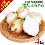 塩たまちゃん 4kg 子出藤さんの 塩玉ねぎ 送料無料 熊本県産 2S-3Sサイズ 2セットで2kg増 7-14営業日以内に出荷(土日祝除く)