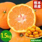 青島系訳あり大粒みかん 1.5kg 2セット以上購入で1セット分、3セット購入で3セット分おまけ※複数セット購入の際1箱おまとめ 1月末-2月中旬頃より順次出荷