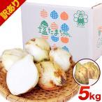 TVで紹介 送料無料 塩たまちゃん 子出藤 (ねでふじ)さんの塩タマネギ 梨のように甘い 熊本...