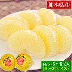 お歳暮 ギフト 送料無料 天草文旦(パール柑)4L-3L/5-6玉入約3kg前後 柑橘の一大産地熊本県産限定 12月中旬-12月末頃より順次出荷