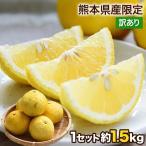 訳あり はるか 1.5kg 熊本県産 送料無料 旬 の 柑橘 みかん 取り寄せ 7-14営業日以内に出荷予定(土日祝日除く)