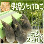kurashi-kaientai_1008-hayabori-takenoko-2kg-3-6