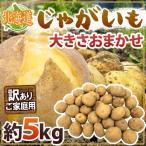 """【送料無料】北海道産 """"じゃがいも"""" 訳あり 約5kg 大きさおまかせ"""