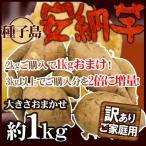 """【送料無料】種子島産 """"安納芋"""" 約1kg 訳あり 2kg購入で1kgおまけ♪3kg以上購入で2倍に増量!【予約 10月中下旬以降】"""