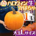 """北海道産 """"ハロウィンかぼちゃ"""" Lサイズ おもちゃかぼちゃ【..."""