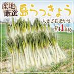 kurashi-kaientai_1082048-shima1kg