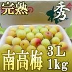 "完熟 紀州・和歌山産 ""南高梅"" 3Lサイズ 約1kg 10キロ購入で送料無料!【予約 5月下旬〜6月下旬】"