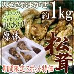 """【緊急スポット】中国産 """"松茸"""" 約1kg 原体 大きさおまかせ ちょっと訳あり【2週間以内の発送】"""