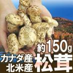 """【予約】カナダ・北米産 """"松茸"""" 約150g 大きさおまかせ(9月上旬〜10月頃の発送予定)"""