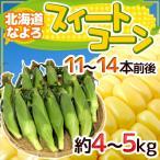 """【送料無料】北海道 JA道北なよろ 高糖度とうもろこし """"スイートコーン"""" 11〜14本前後 約4〜5kg【予約 8月中下旬〜9月】"""