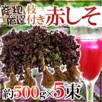 kurashi-kaientai_1099048-neaka2500g