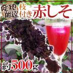 kurashi-kaientai_1099048-neaka500g