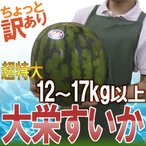 """【送料無料】鳥取県 """"ジャンボ大栄すいか"""" ちょっと訳あり 特大6L 12kg以上 大栄西瓜【予約 6月以降】"""
