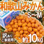 """柑橘類 - 【送料無料】""""和歌山みかん"""" 訳あり S〜Mサイズ 約10kg【予約 11月下旬以降】"""