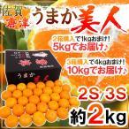 """橘子 - 【送料無料】佐賀産 JAからつ """"うまか美人みかん"""" 約2kg S/2Sサイズ 2箱購入で1kgおまけ【予約 10月中旬以降】"""
