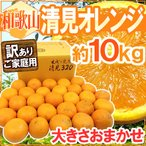 """【送料無料】和歌山産 """"清見オレンジ"""" 訳あり 約10kg 大きさおまかせ【予約 3月以降の発送】"""